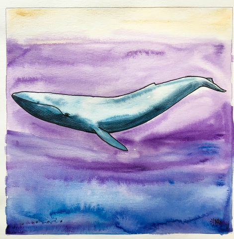 blue whale illustration follow the sun art