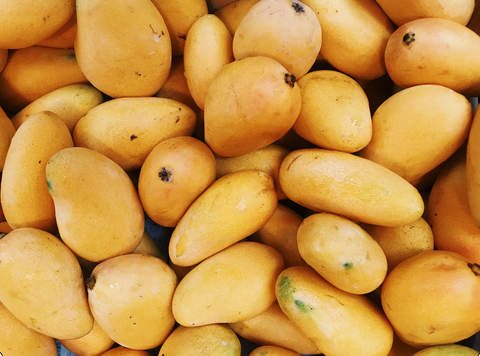 group of ripe mangoes