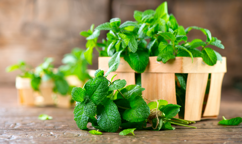 Bunch of fresh green organic mint leaf on wooden table closeup