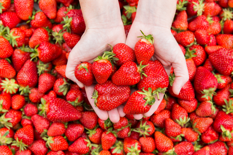hand holding up a bunch of strawberries