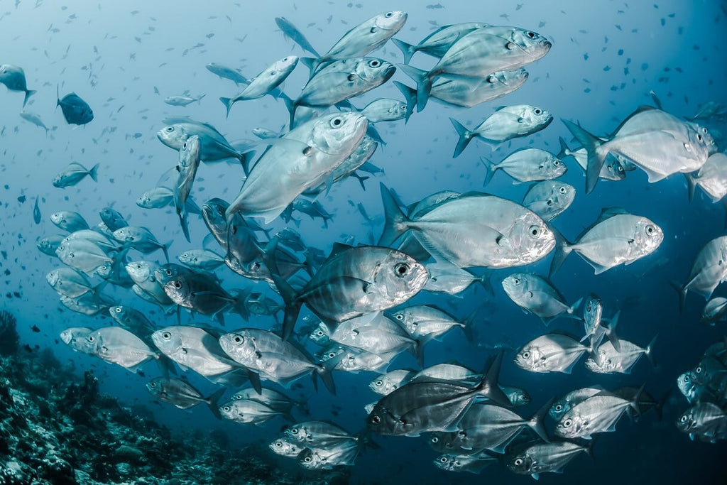 A Comprehensive Guide to Overfishing | The Facts, Causes, and Solutions
