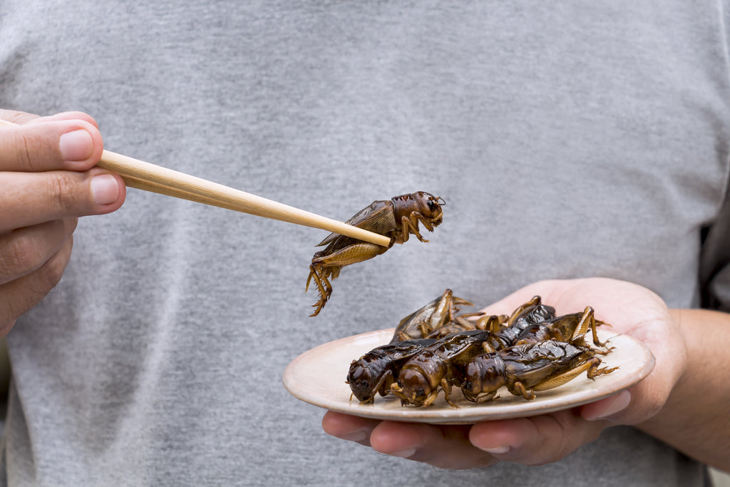 Crickets for the Paleo Diet