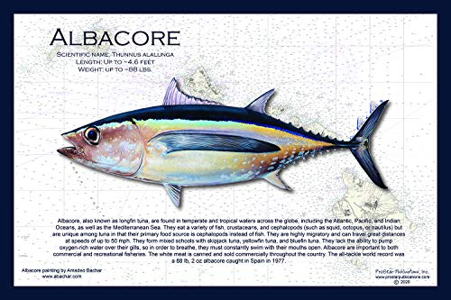 Fish Placemat: Albacore