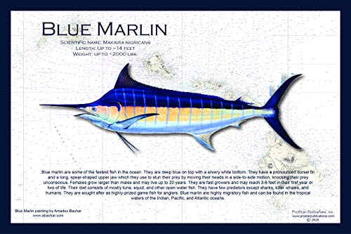 Fish Placemat: Blue Marlin