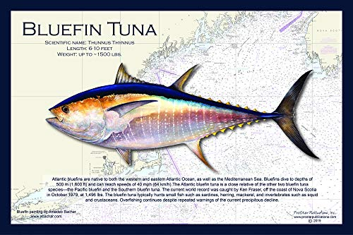 Fish Placemat: Bluefin Tuna