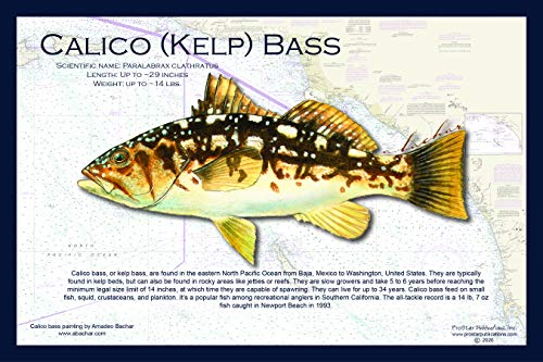 Fish Placemat: Calico Bass