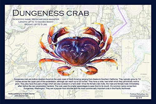 Fish Placemat: Dungeness Crab