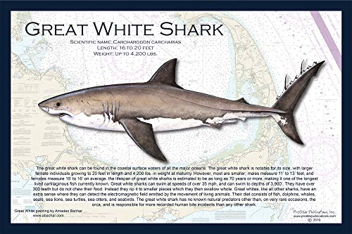 Fish Placemat: Great White Shark