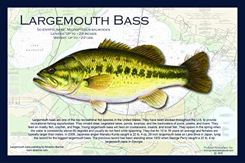 Fish Placemat: Largemouth Bass