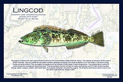 Fish Placemat: Lingcod