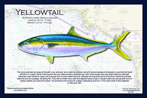 Fish Placemat: Yellowtail
