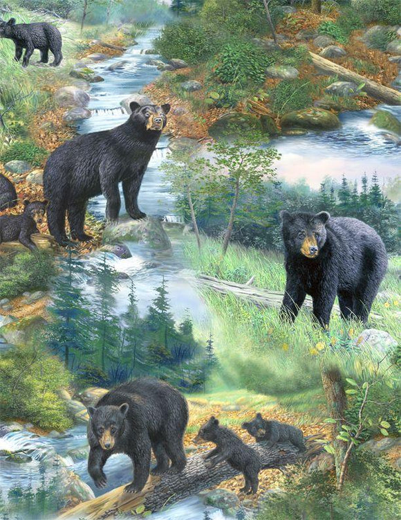 A New Adventure Black Bears