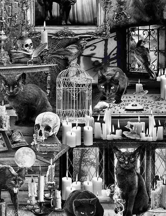 Black Cats in Haunted House
