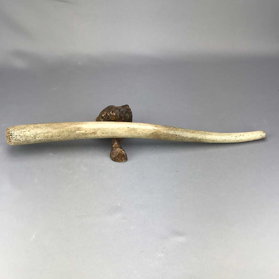 Excavated Walrus Oosik Penile Bone - Partial (A)