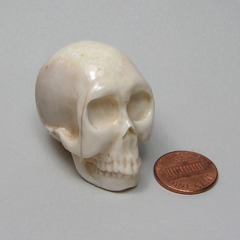 Fossil Walrus Ivory Handcarved Skull 2