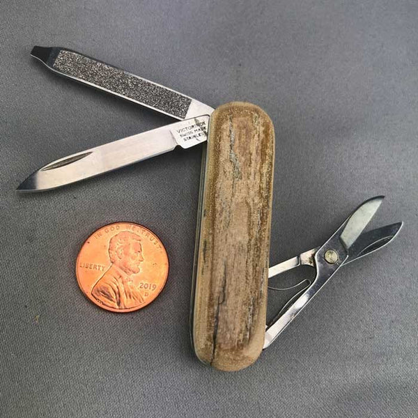 Mammoth Bark Ivory Handled Folding Swiss Army Knife 19