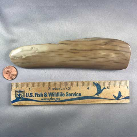 Mammoth Ivory Polished  Bark Display Piece 02