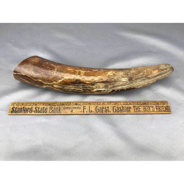 Mammoth Ivory Polished Tusk Tip Section 14