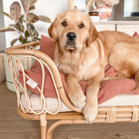 Molly Rattan Dog Bed LATE OCTOBER DELIVERY