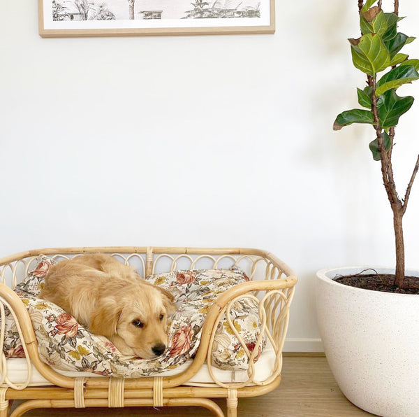 Molly Rattan Dog Bed