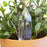 Water From A Crystal - Blown Glass Automatic Self Watering - Water Your Plants