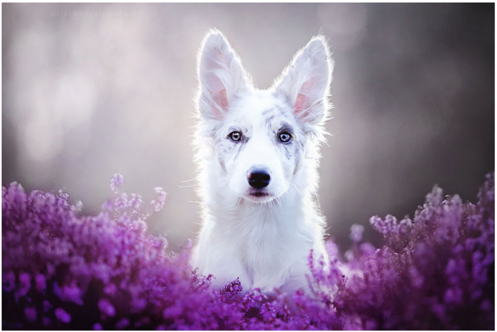 Polish photographer takes the most breathtaking dog photos