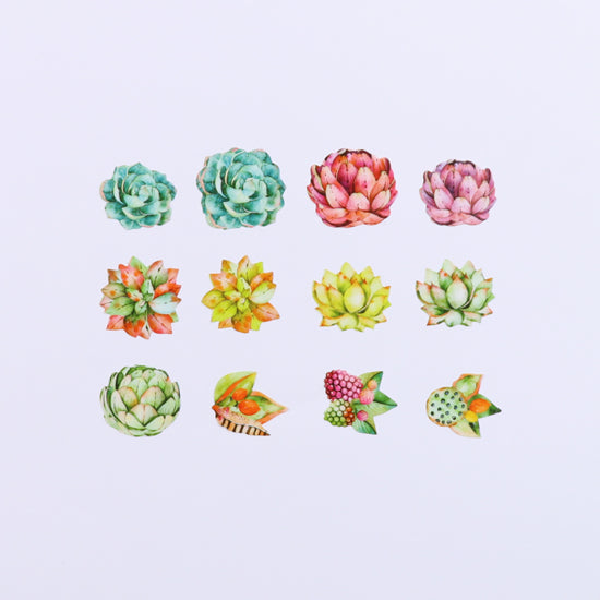 Bande Succulents Washi Roll Sticker - Cityluxe
