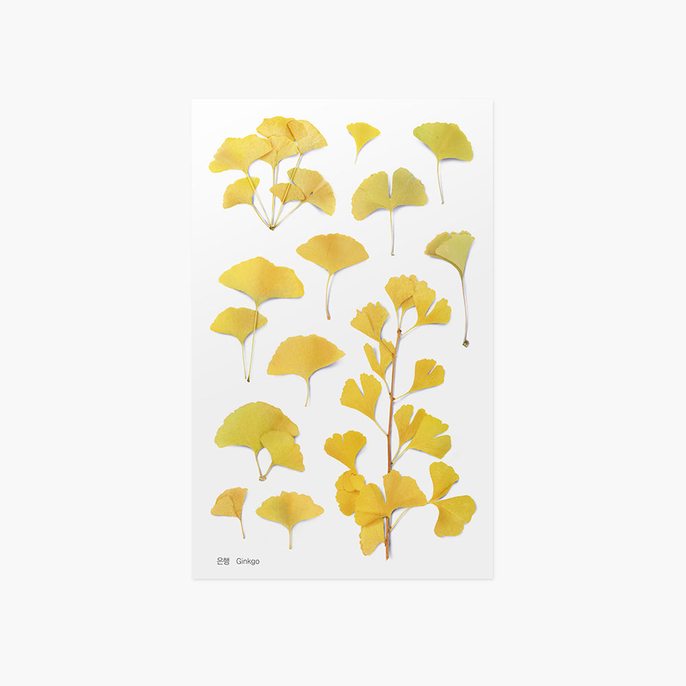 Appree Pressed Flower Sticker Gingko