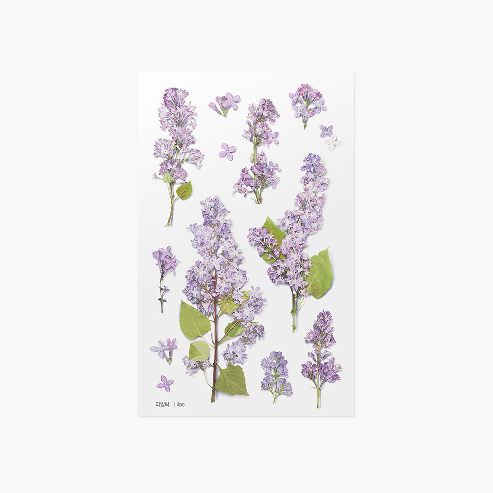 Appree Pressed Flower Sticker Lilac