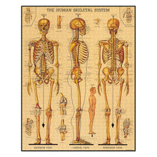 Load image into Gallery viewer, Cavallini Puzzle Skeletal System