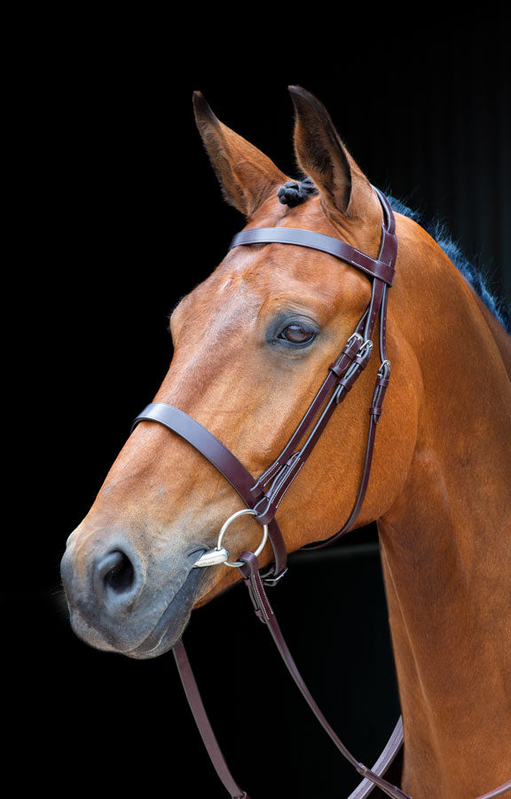 Salisbury Fairford Bridle
