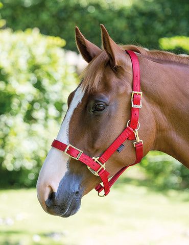 Pro Adjustable Headcollar