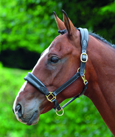 Blenheim Cushioned Travel Leather Headcollar