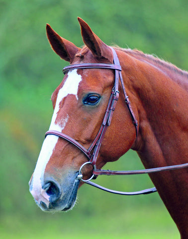 Shires Avignon Snaffle Bridle