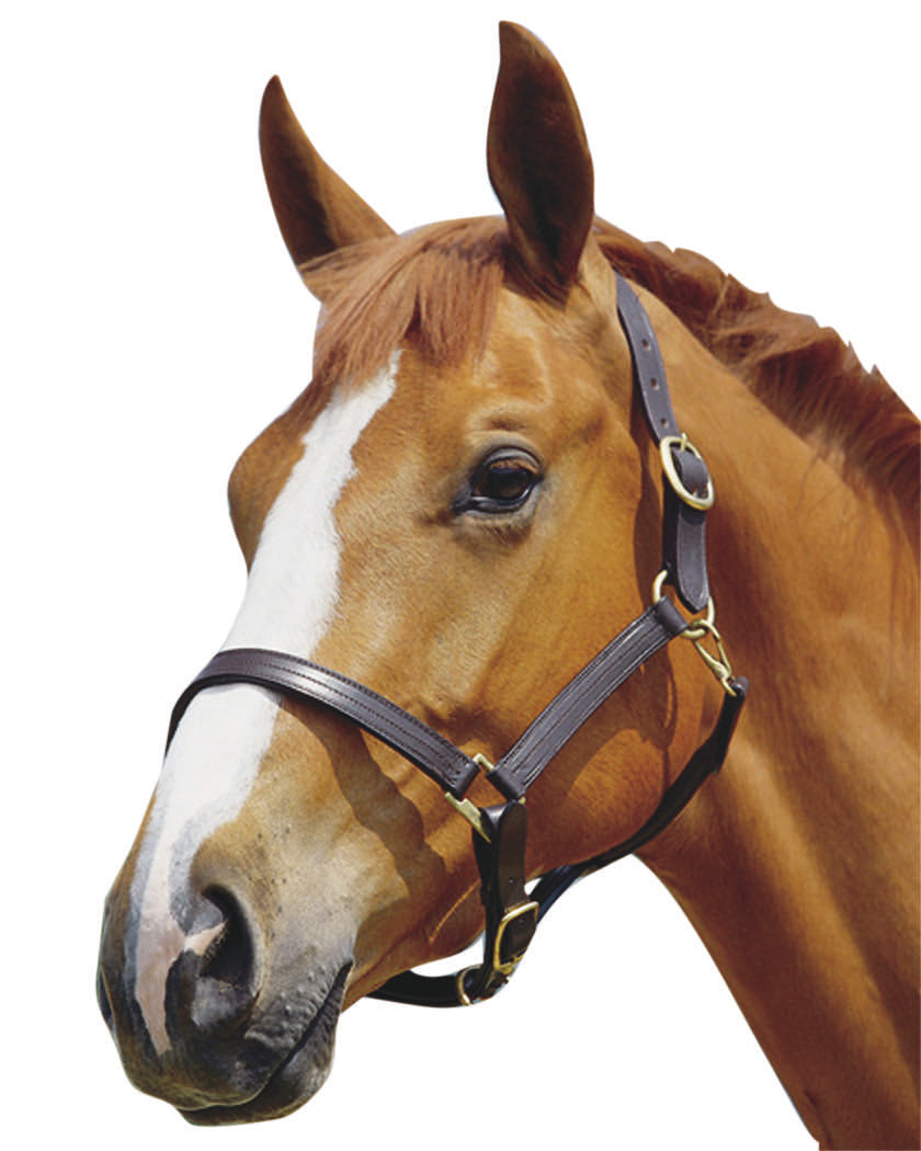 Kincade Triple Stitch Leather Headcollar