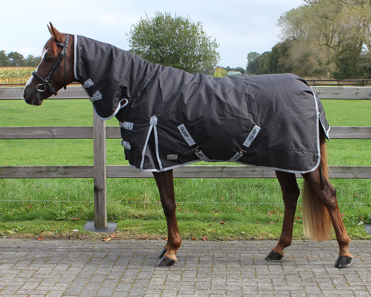 Turnout Rug Fixed Neck 300gr