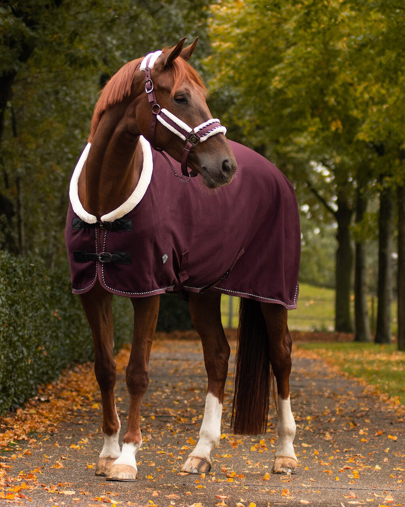 Luxury soft-shell show rug