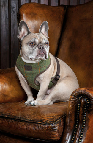 Digby & Fox Tweed Dog Harness