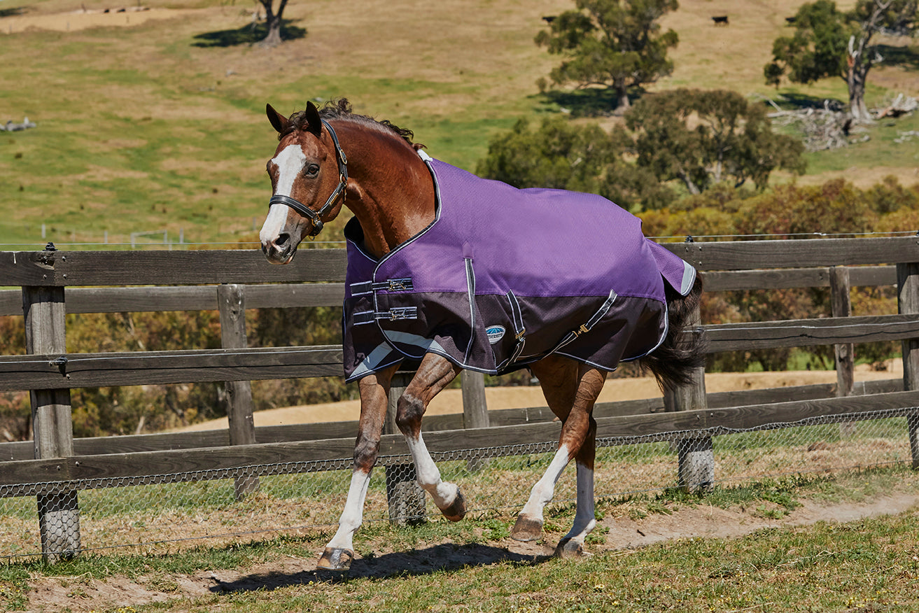 Weatherbeeta Comfitec Plus Dynamic Lightweight Rug