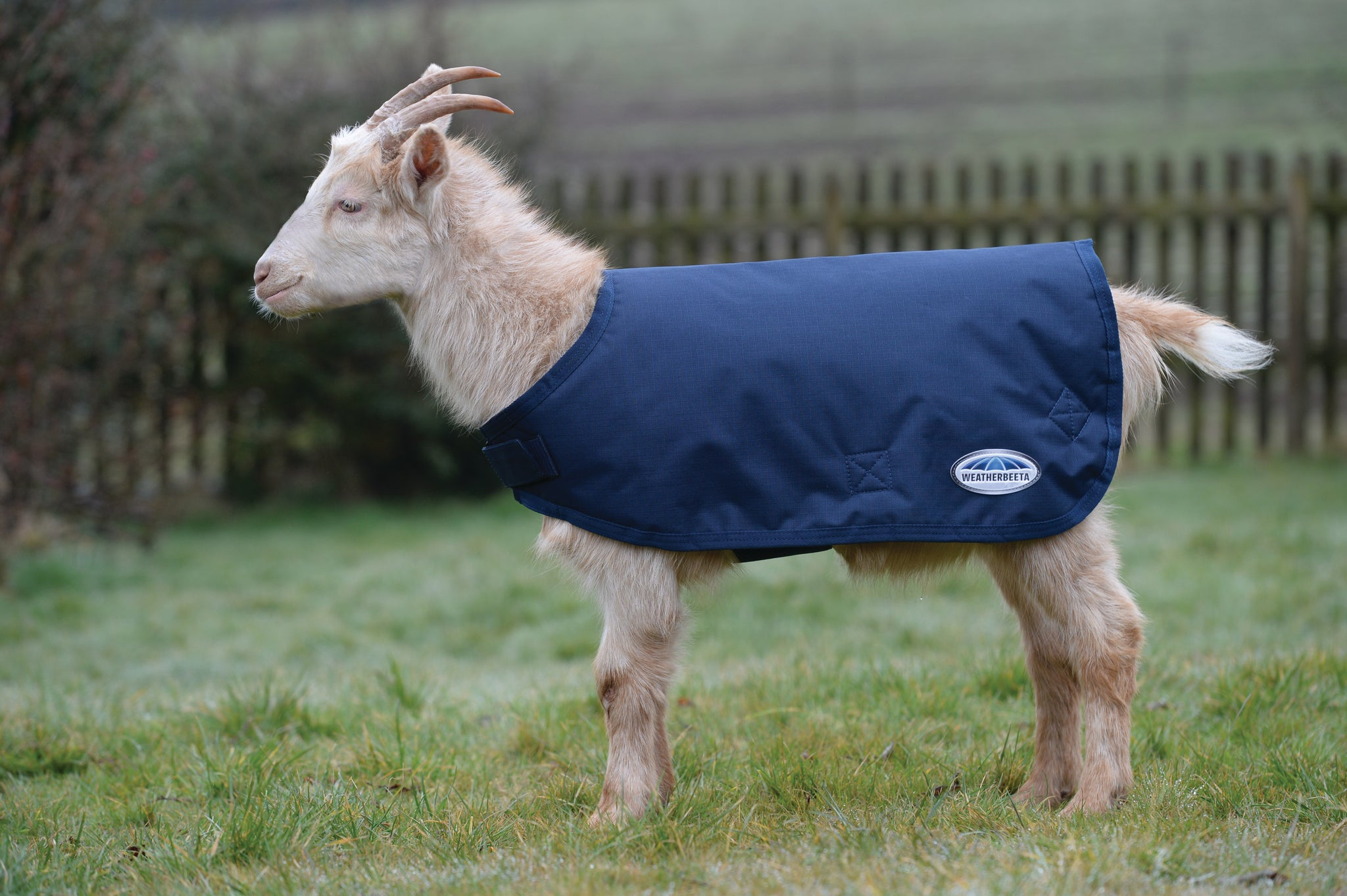 Goat Coat (Goat Shell)