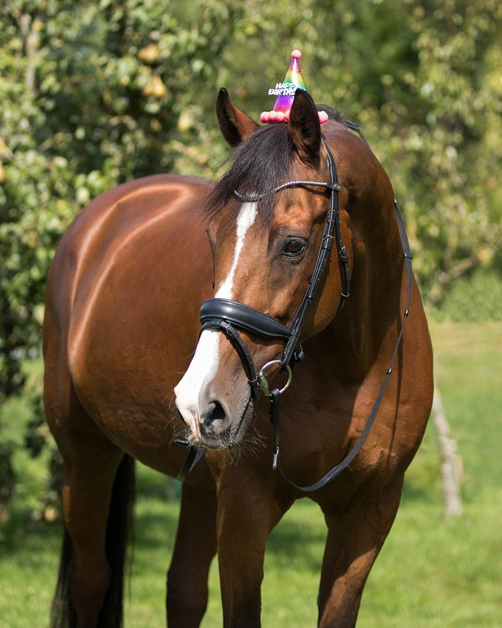 Birthday Hat Horse