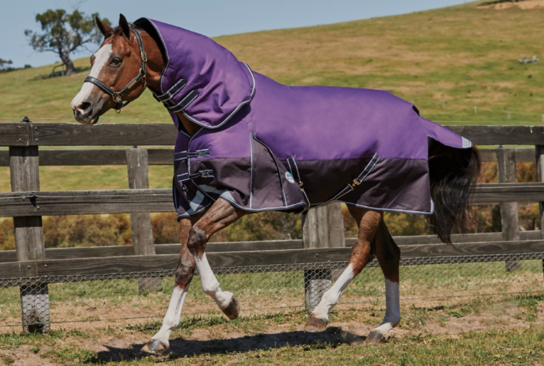 Weatherbeeta Comfitec Plus Dynamic Detach-A-Neck Lite Turnout Rug