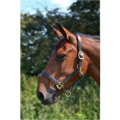 Gallop Leather Padded Headcollar
