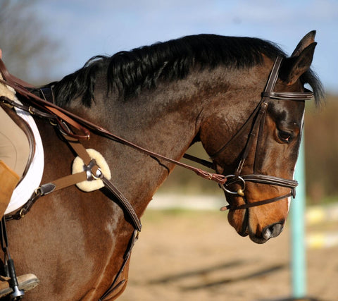 John Whitaker Valencia 5 Point Breastplate