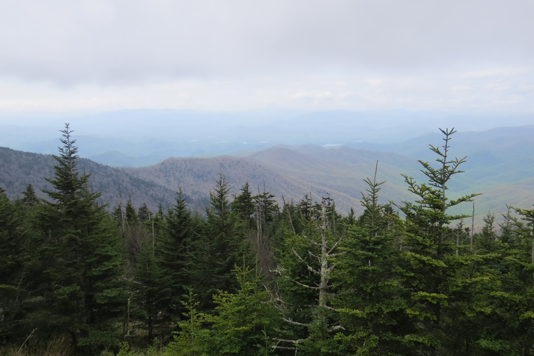 illustrated guide to great smoky mountains national park the gap