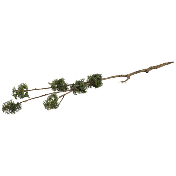 twig plant moss branch