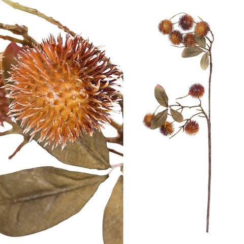 thistle plant brown castanea s