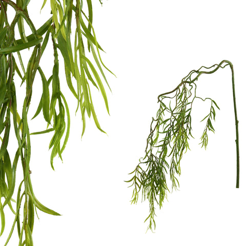 leaves plant green hanging willow