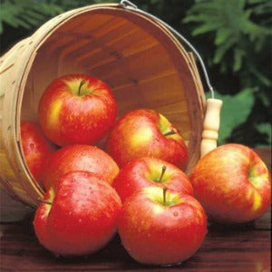 Apple & Honeycrisp Diffuser Oil Refill