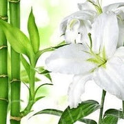 Bamboo & White Lily Fragrance Oil